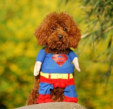Superman outfit for dogs